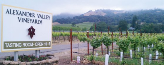 AlexanderValley_Vineyard