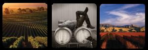 Greywacke-winery