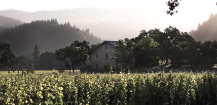 ehler_vineyard