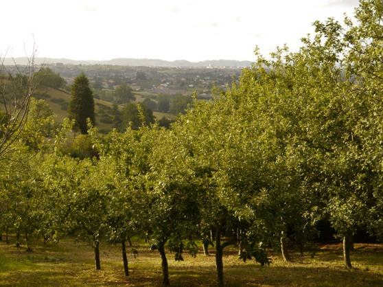 Trabanco Orchard