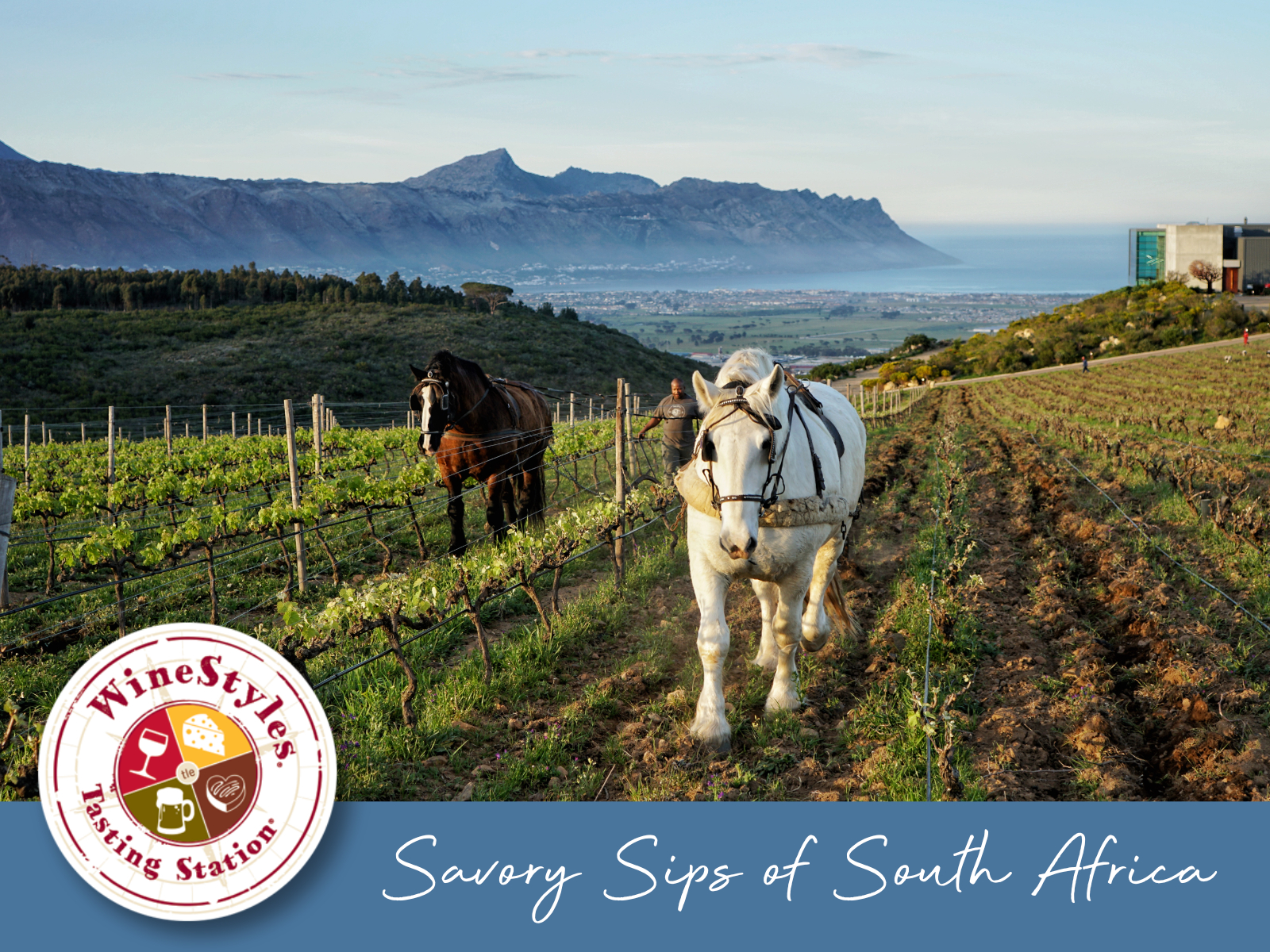 Savory Sips of South Africa
