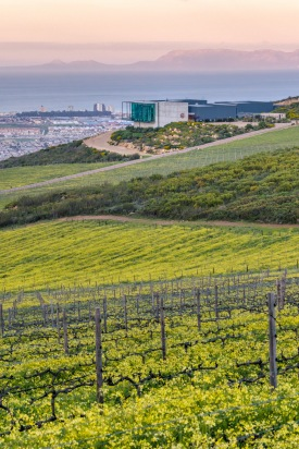 Photo by Waterkloof: Vineyard in the Spring