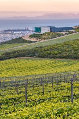 Photo by Waterkloof: Vineyard in the Spring