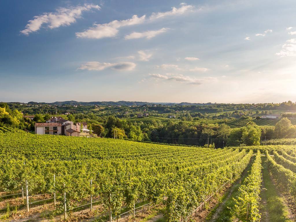 Cantina Pizzolato Organic Vineyards