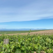 Two Mountain Vineyard