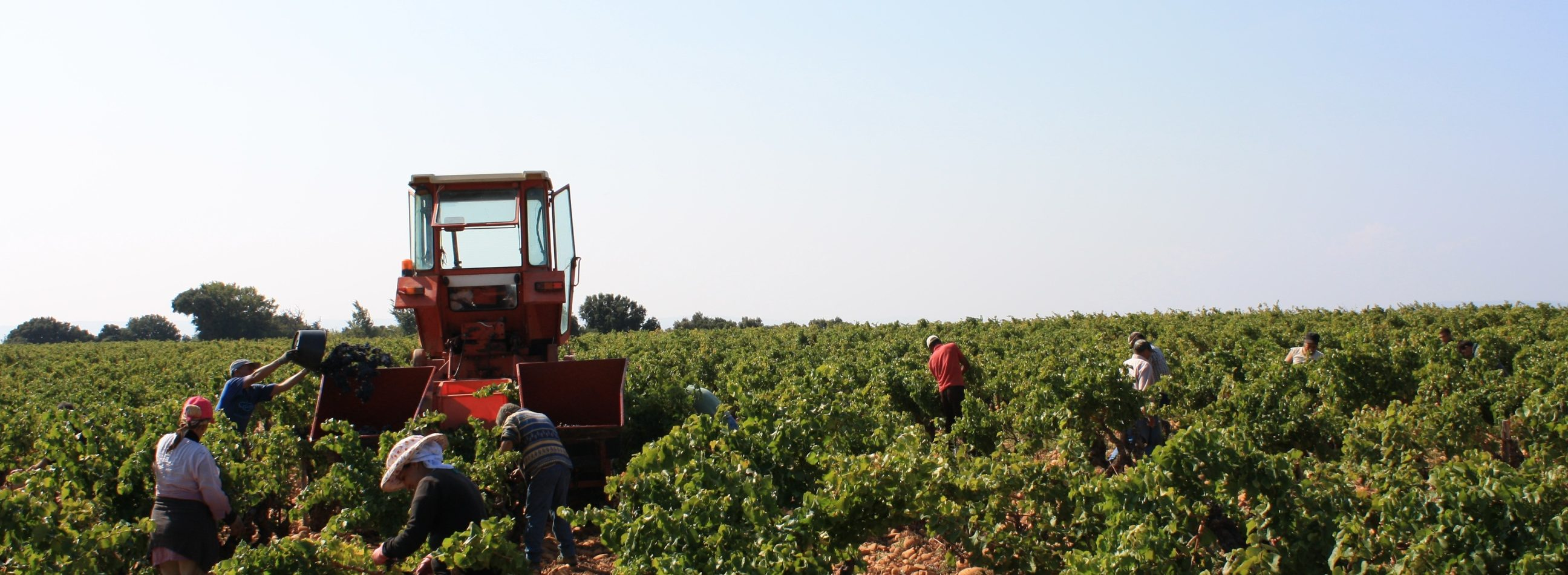 Domaine Chante Cigale Harvest