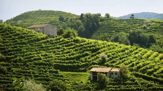 Mionetto Vineyard