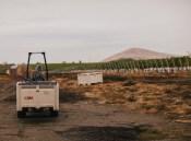 Kiona Estate Vineyard