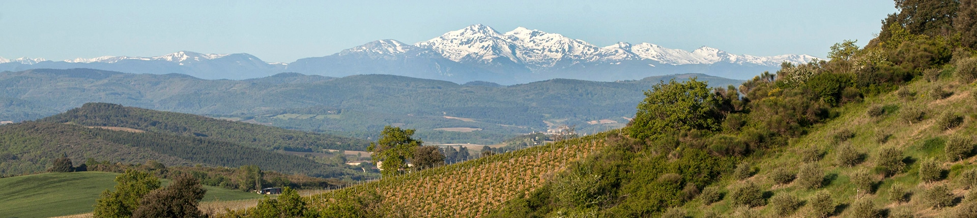 © Photo by Antech Winery