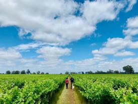Penley Estate_Vineyard2