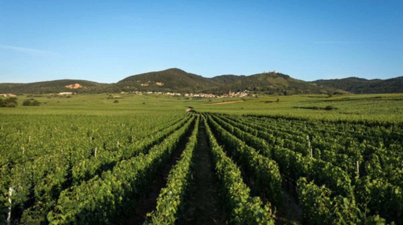 Alsace wines Charles Baur Eguisheim_ Crémant d'Alsace Brut