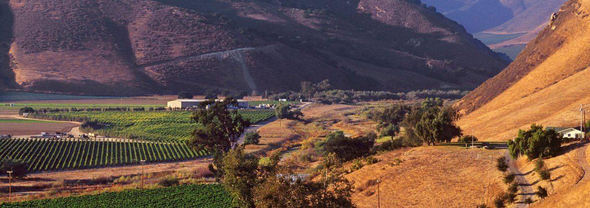 Martellotto Winery