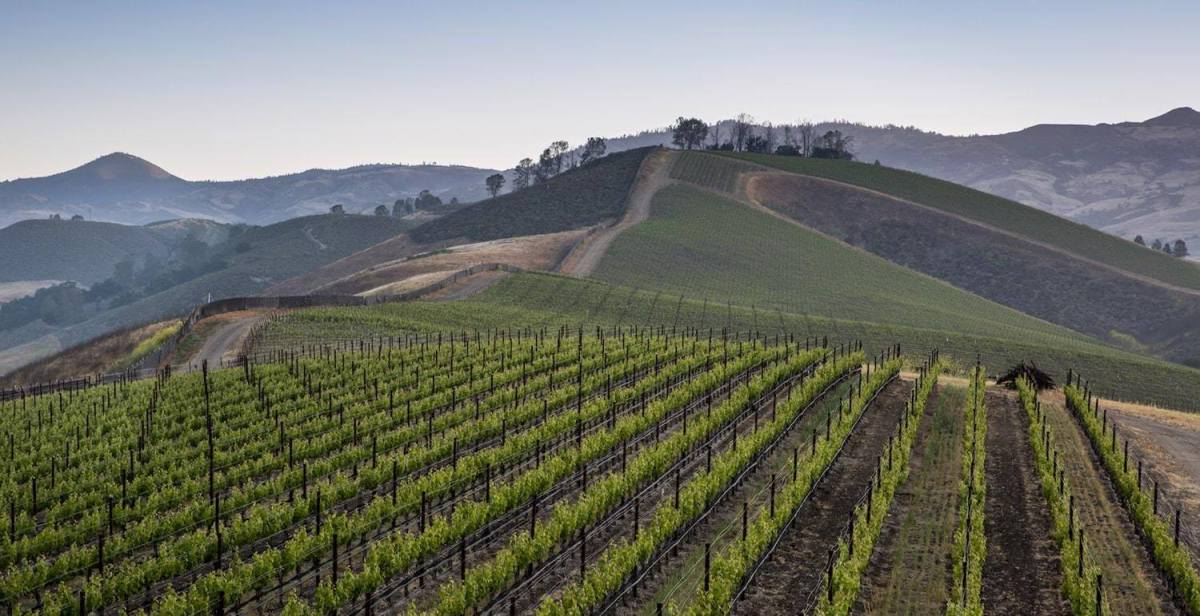 Martellotto Winery_
