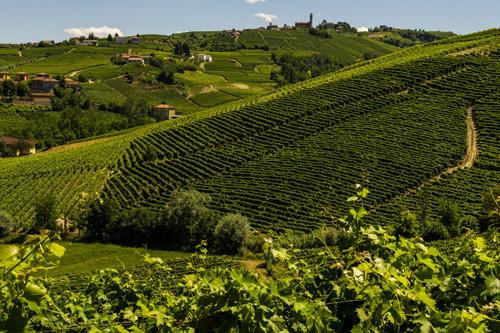 Saracco Vineyards