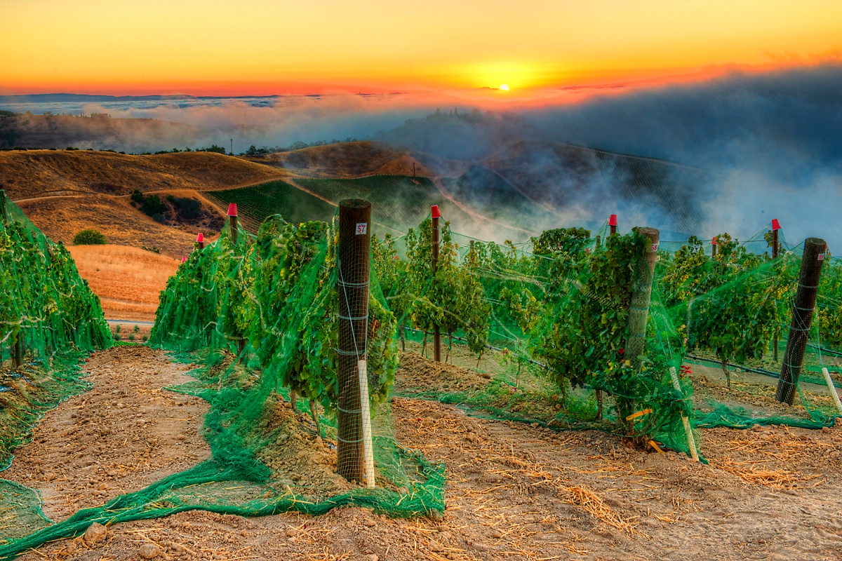 © Photo by DAOU Vineyards