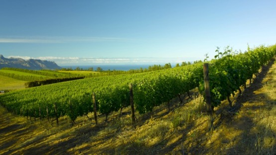 False Bay Vineyard