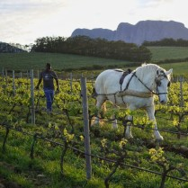© Photo by False Bay Vineyards