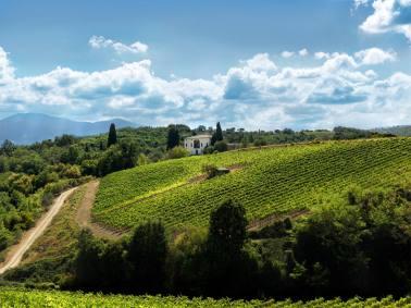 Ruffino Vineyards