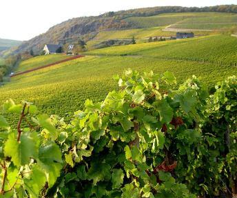 BEX Vineyard
