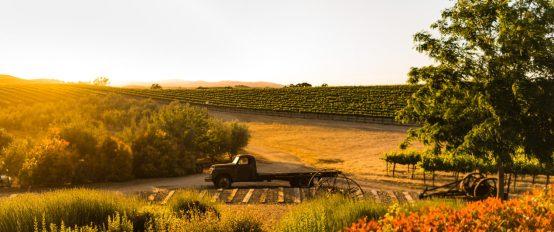 Pomar Junction Vineyard