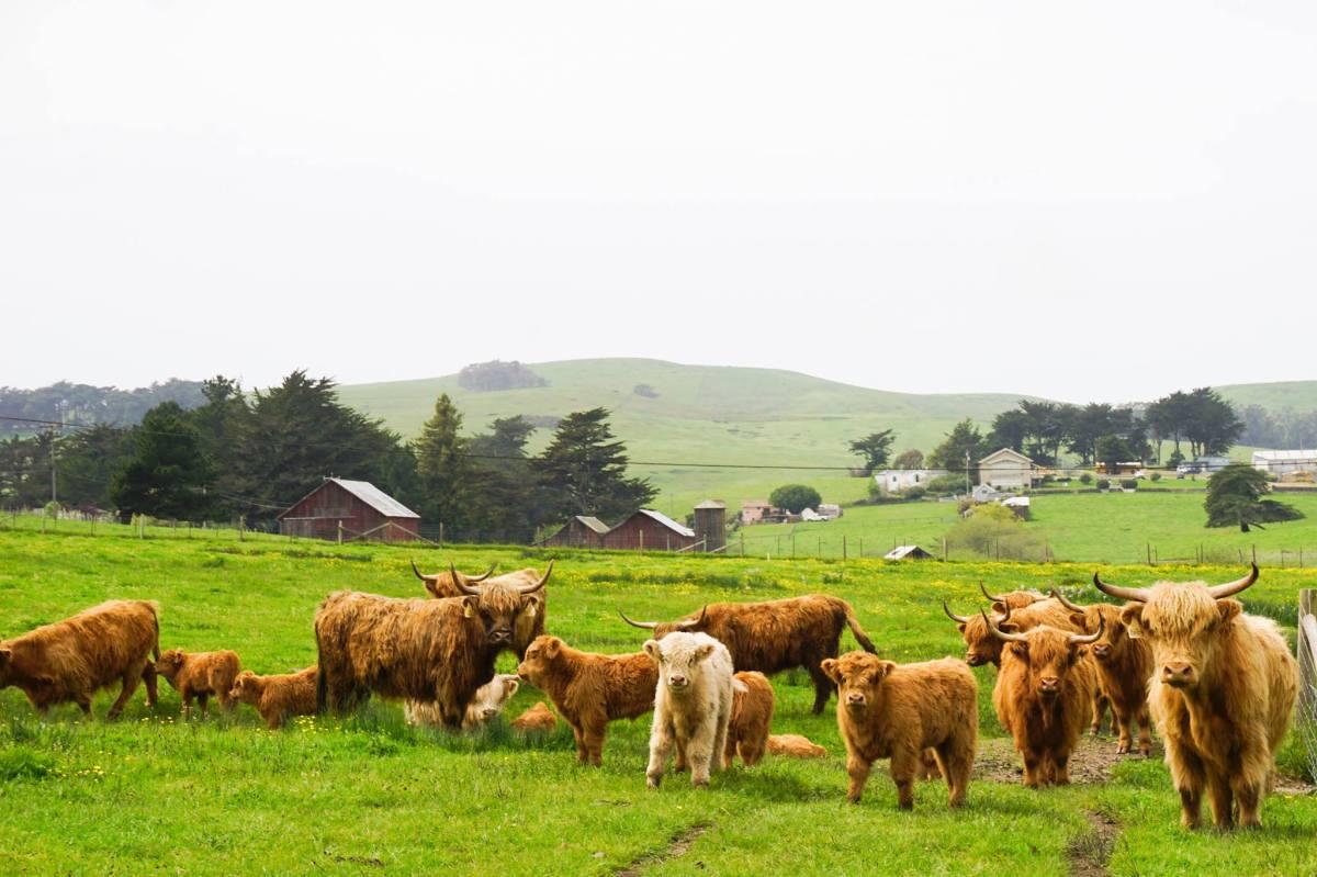 Long Meadow Ranch_Farmstead