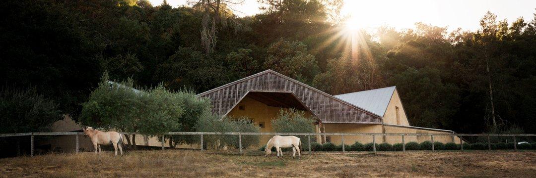 Long Meadow Ranch_Horse