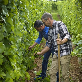 Wine growers