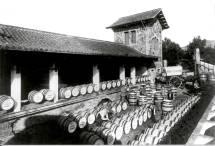 Alella Vinícola Vineyard 2