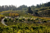 © Photo by Benziger Family Winery